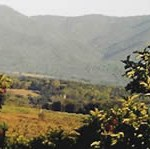 Orchards and mountains